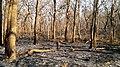 Forest Fire @ Wayanad Wildlife Sanctuary, Muthanga Range - panoramio (6).jpg