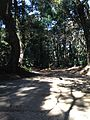 Forest in Kashima Shrine 20140308-2.jpg