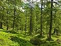 Foresta (Alpe Veglia).jpg