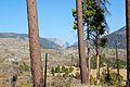 Foresta fire aftermath - Flickr - daveynin.jpg