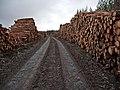Forestry in Glinne Bhig - geograph.org.uk - 1117261.jpg