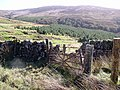 Forestry on Benawhirn - geograph.org.uk - 713616.jpg