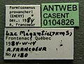 Formicoxenus provancheri casent0104826 label 1.jpg