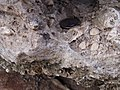 Fossil P8130019.jpg