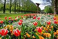 Frühling im Bad Mergentheimer Kurpark. 22.jpg