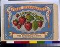 Fresh strawberries - Wm. Everdell's Sons, N.Y. LCCN93504445.tif