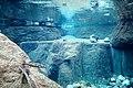 Freshwater aquarium - panoramio.jpg