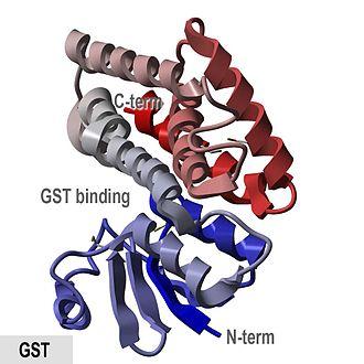 Glutathione S-transferase - Image: GST wiki