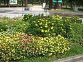 Garden yasuragi.jpg