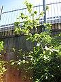 Gardenology.org-IMG 0622 rbgs10dec.jpg