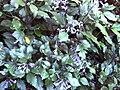 Gardenology.org-IMG 1305 rbgs10dec.jpg