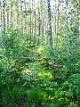 Garkalnes novads, Latvia - panoramio (16).jpg