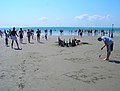 Gaudi Comes to West Wittering - geograph.org.uk - 522850.jpg