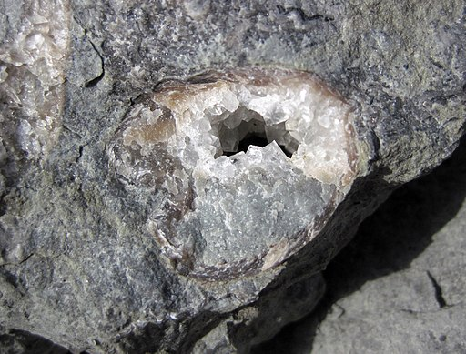 Geopetal structure in Platystrophia ponderosa brachiopod in limestone (Corryville Member, McMillan Formation, Upper Ordovician; Flemingsburg South roadcut, Fleming County, Kentucky, USA) 2