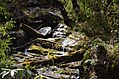 Ghorepaani Ghandruk Trail 4.jpg