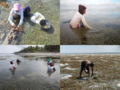 Gleaning activity on seagrass.png
