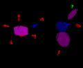 Glucametacina.png