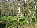 Golf Course near Enville, Staffordshire - geograph.org.uk - 365917.jpg