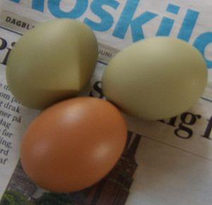 Easter Egger - Easter Egger eggs and an ISA Warren egg from Denmark