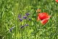 "Gradina Botanica ""Vasile Fati"" (4653310623).jpg"