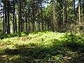 Grafheuvel nabij Hazeleger in Wolfheze -02.jpg