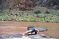 Grand Canyon 00573 n 7ab88k78v230 (2540912132).jpg