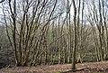 Green Wood (3) - geograph.org.uk - 1252966.jpg