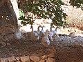 Grotta Mangia pane - panoramio (22).jpg
