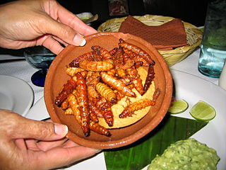 Mezcal worm Insect larva added for flavor to mezcal