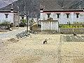 Gyantse, Tibet - 5839.jpg