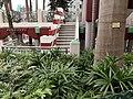 HK SW 上環 Sheung Wan 堅巷花園 Caine Lane Garden February 2020 SS2 05.jpg