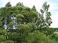 HPIM0177 - panoramio.jpg