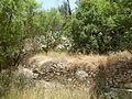 Hadassah Trail P1150514.JPG
