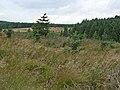 Haining, Wark Forest - geograph.org.uk - 244707.jpg
