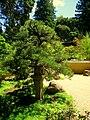 Hakone Gardens, Saratoga, CA - IMG 9152.JPG