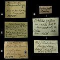 Handwriting of labels in mollusc collection in Museum für Naturkunde Berlin - ZooKeys-279-001-g002.jpg