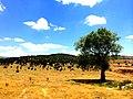 Harmancıkta - panoramio (1).jpg