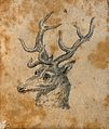 Head of a stag. Drawing, c. 1789. Wellcome V0009138ETR.jpg