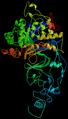 Helicobacter Pylori Urease.png