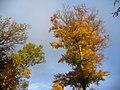 Herbstfarben bei der Teufelsschlucht (Autumn Colours by the Devil's Gorge) - geo.hlipp.de - 14769.jpg