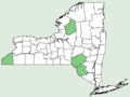 Holcus mollis NY-dist-map.png