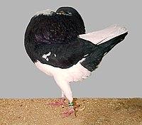 Holle cropper(black).jpg
