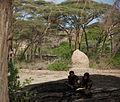 Homo erectus Daka Ethiopia.jpg