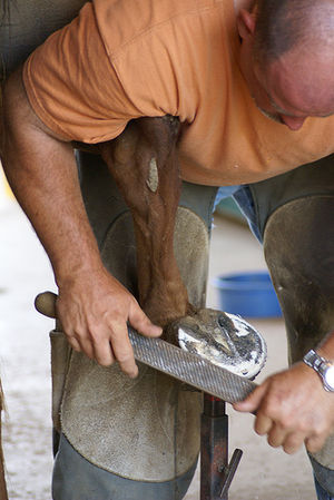 Rasp - Farrier using a two-sided file, double-cut on the visible side and rasp cut against a horse's hoof