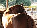 Horse-Sde Yoav.jpg