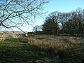 Howes Plantation - geograph.org.uk - 162432.jpg