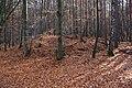 Huegelgräber B2 Duebener Heide.jpg
