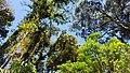 Hutan Tropis Gunung Slamet.jpg
