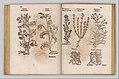 I) Herbarum, Arborum, Fructium, Frumentorum, c. 1540 ... II) De Speciali quarundam plantarum, Frankfurt- Egenolff 1552 MET DP327886.jpg