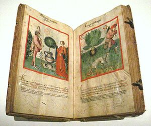 Tacuinum Sanitatis - Ibn Butlan's Tacuinum sanitatis, Rhineland, 2nd half of 15th century